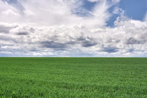 Prado verde y cielo azul con nubes al atardecer