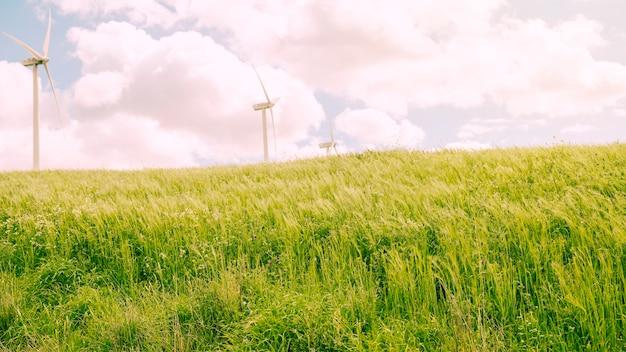 Prado verde con cielo nublado