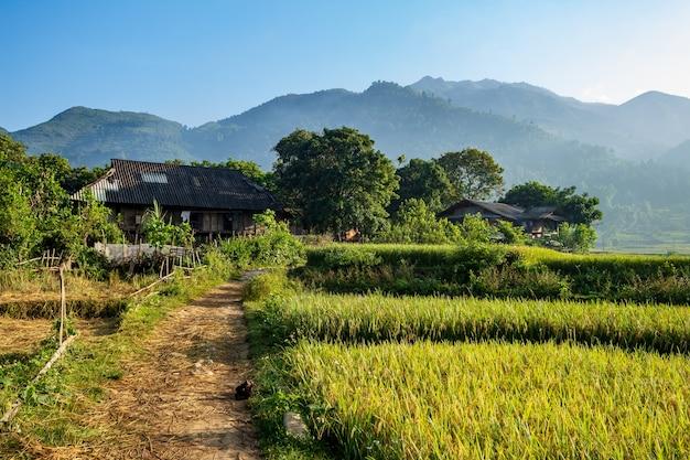 Prado en vietnam