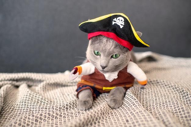 Precioso gatito disfrazado de pirata.