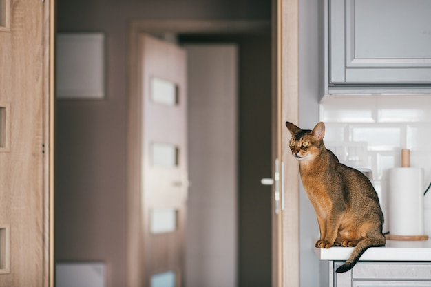 Precioso gatito gracioso en la cocina.