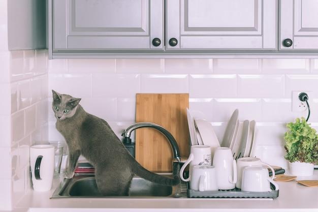 Precioso gatito jugando en la cocina. divertido gato azul ruso sentado en el fregadero.