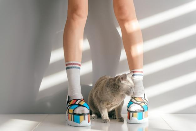 Precioso gatito sentado entre piernas femeninas en zapatos de moda