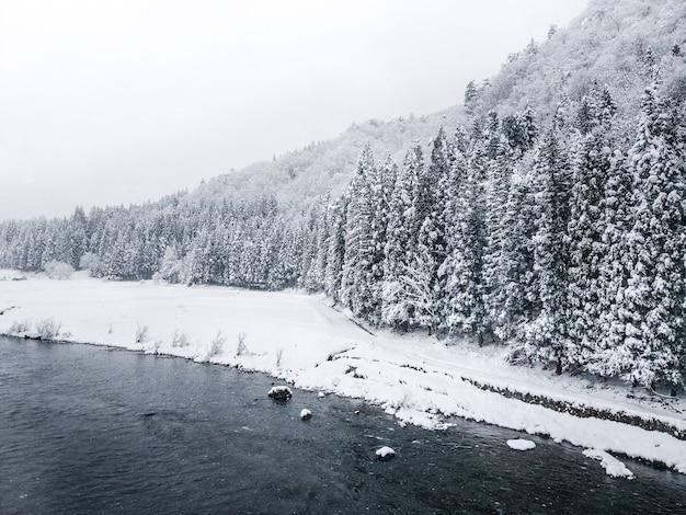 Precioso paisaje de invierno con abetos cubiertos de nieve.