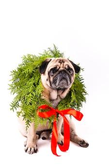 Precioso perro con corona de navidad en el cuello