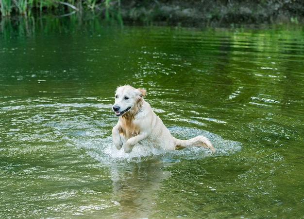 Precioso perro divirtiéndose en el río solo en primavera