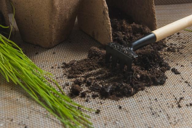 Preparación para el trasplante estacional de plantas, siembra en concepto de jardín.