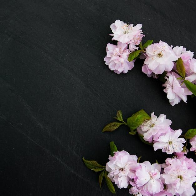Primavera flor de sakura
