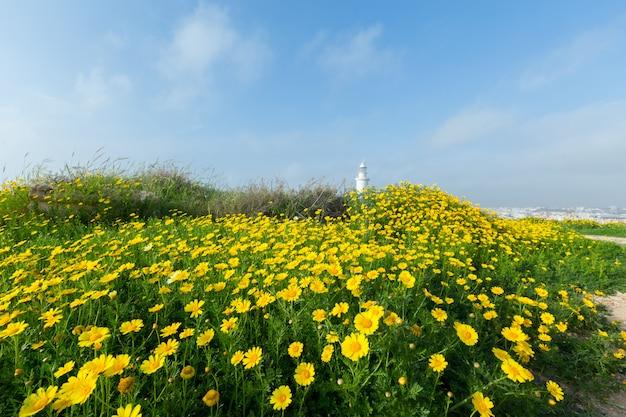 Primavera con hermosas flores amarillas