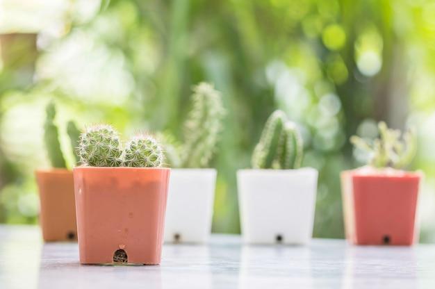 Primer cactus en maceta de plástico en mesa mable en frente de casa