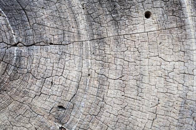 Primer corte de sierra de árbol seco.