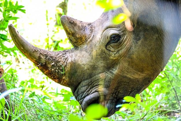 Primer disparo de la cabeza de un rinoceronte cerca de las plantas y un árbol sin un día soleado