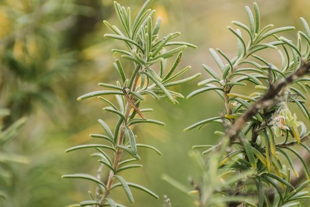 Primer disparo de enfoque selectivo del cultivo de plantas verdes, perfecto para
