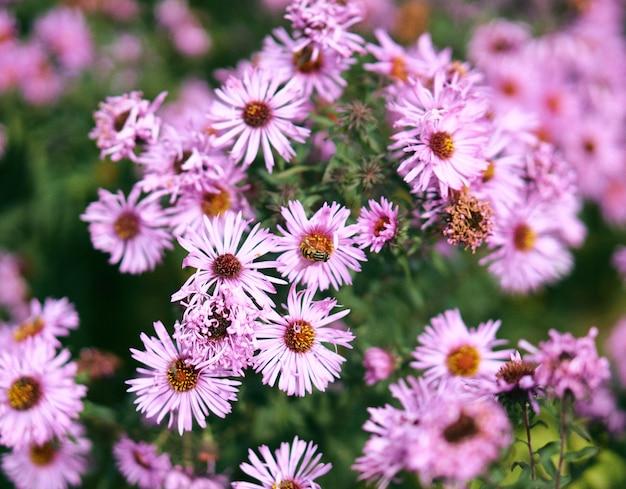 Primer disparo de enfoque selectivo de flores rosadas con una abeja en la parte superior y vegetación
