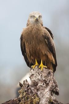 Primer disparo de enfoque selectivo de una hermosa águila real