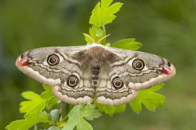 Primer disparo de enfoque selectivo de una hermosa mariposa sentada en una planta
