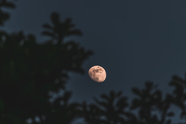 Primer disparo de enfoque selectivo de la luna con árboles