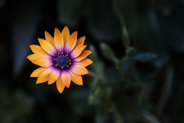 Primer disparo de una flor de naranja con fondo borroso