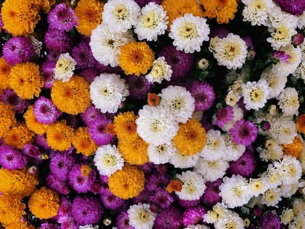 Primer disparo de una hermosa composición de flores: ideal para un fondo colorido o papel tapiz