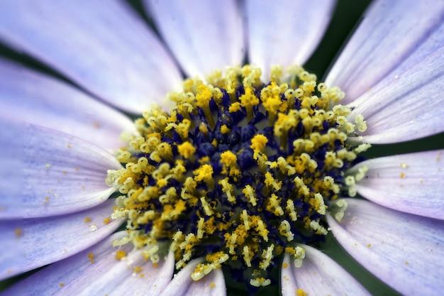Primer disparo de una hermosa flor morada