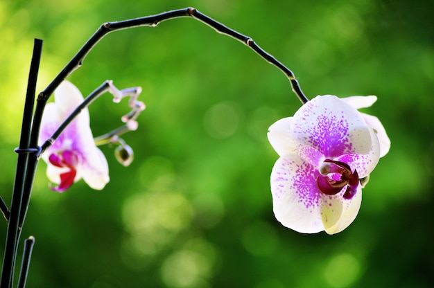 Primer disparo de una hermosa flor de orquídea con un fondo borroso