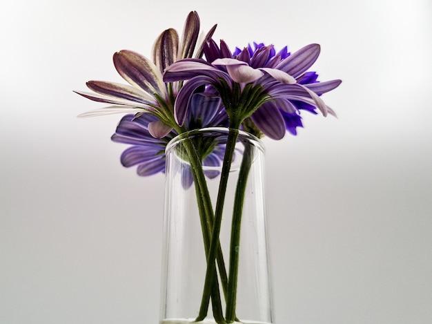 Primer disparo de un hermoso ramo de flores en un jarrón de vidrio aislado sobre un fondo blanco.