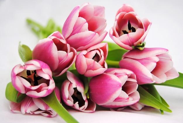 Primer disparo de hermosos tulipanes rosados sobre una superficie blanca