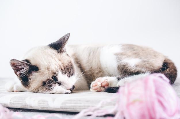 Primer disparo de un lindo gato marrón y blanco durmiendo cerca de la bola de lana rosa
