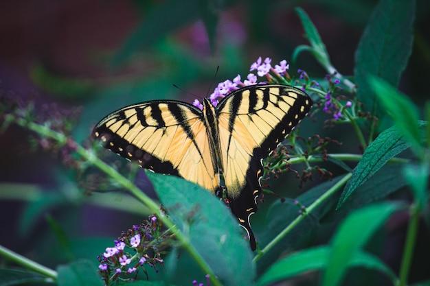 Primer disparo de una mariposa sobre flores de color púrpura
