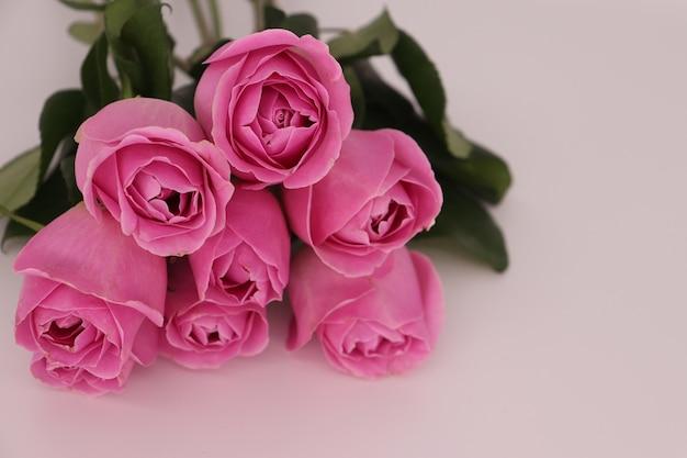 Primer disparo de un ramo de rosas rosadas sobre un fondo blanco.