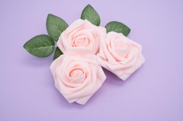 Primer disparo de rosas rosadas aislado sobre un fondo púrpura