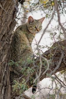 Primer disparo vertical de un gato gris sentado en la rama de un árbol