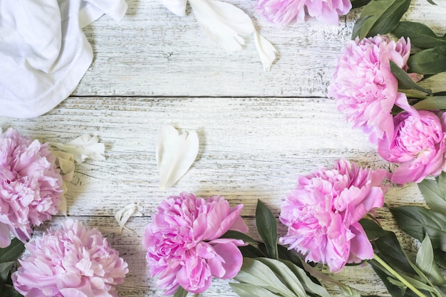 Primer de las flores rosadas hermosas de la peonía con los pétalos en el fondo de madera blanco. lay flat