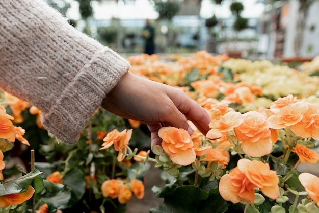 Primer florista tocando flores naranjas