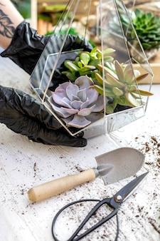 Primer hembra diseñador de floristería manos sosteniendo suculentas florarium de vidrio composición de arte botánica