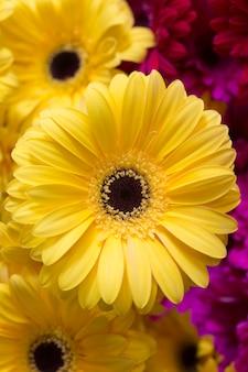 Primer hermoso de la flor amarilla del gerbera.