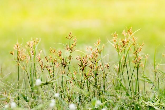 Primer de la hoja verde en fondo borroso en jardín