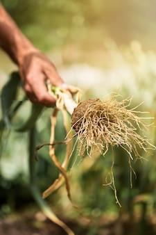 Primer mano que sostiene la verdura