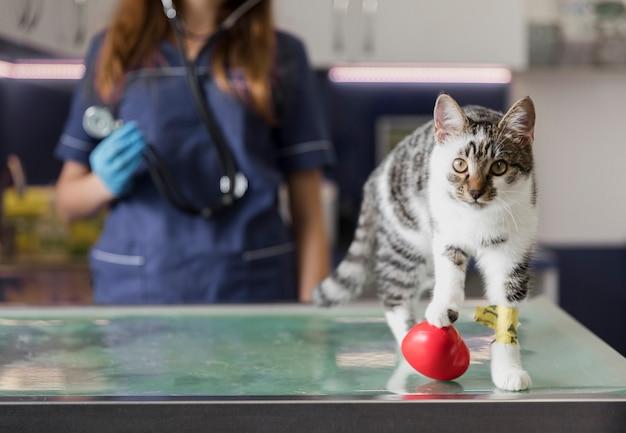 Primer médico con estetoscopio y lindo gato