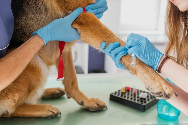 Primer médico haciendo perro una inyección