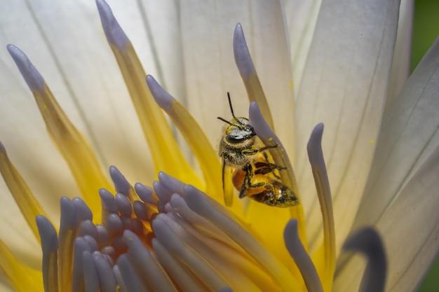Primer plano de una abeja en una flor blanca bajo las luces