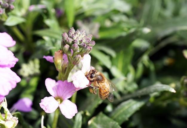 Primer plano de una abeja sentada sobre una flor