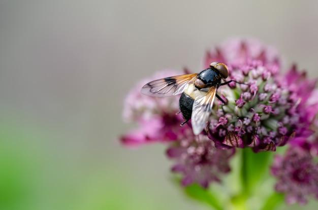 Primer plano de una abeja sobre una flor violeta en el jardín