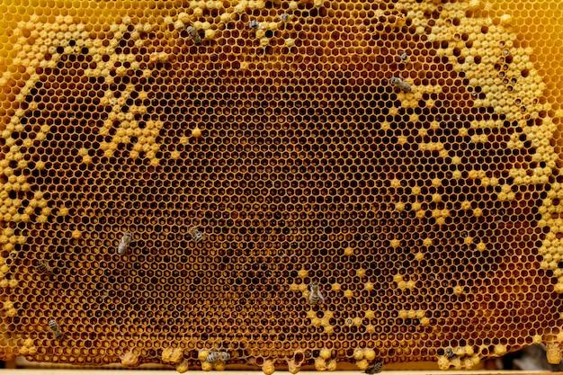 Primer plano de las abejas en panal en colmenar - enfoque selectivo, espacio de copia