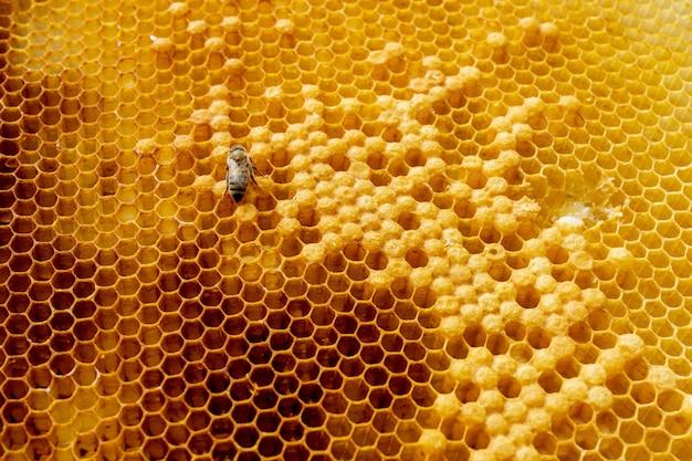 Primer plano de abejas en panal en colmenar - enfoque selectivo, espacio de copia.