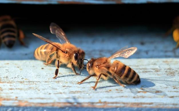 Primer plano de abejas sobre una superficie de madera durante el día