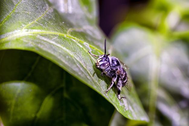 Primer plano de un abejorro sentado encima de una hoja