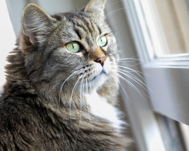 Primer plano de un adorable gato doméstico de pie delante de la ventana bajo la luz del sol