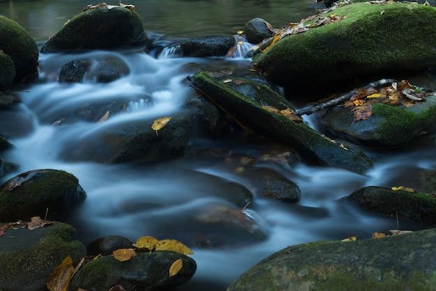 Primer plano del agua espumosa del río que cubre las piedras cubiertas de musgo con hojas de otoño caídas