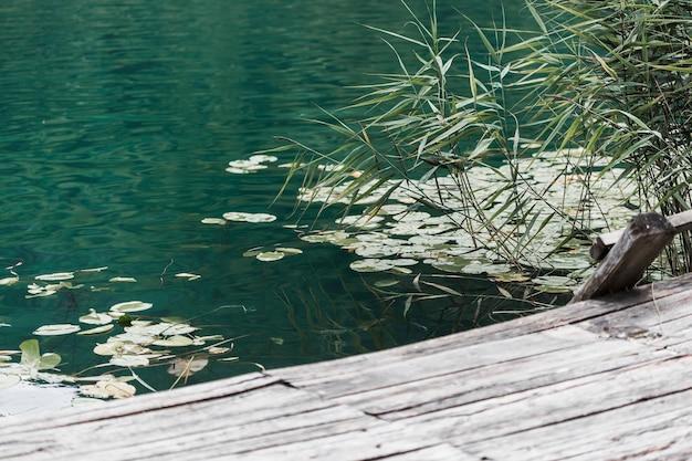 Primer plano de almohadillas de lirio flotando en el lago cerca del muelle de madera